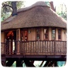 Дом-на-деревьях.jpg